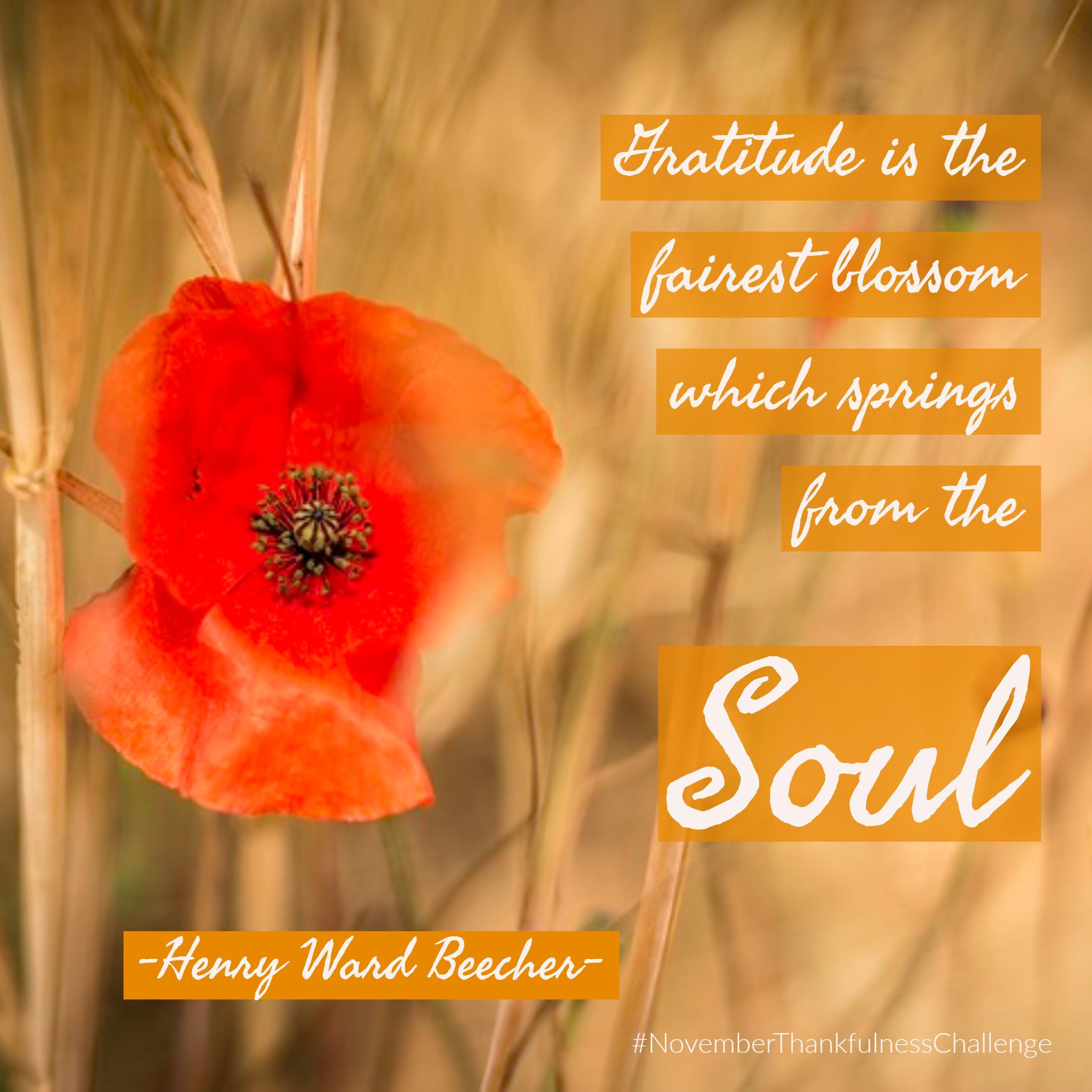 beecher-gratitude-is-the-fairest-blossom