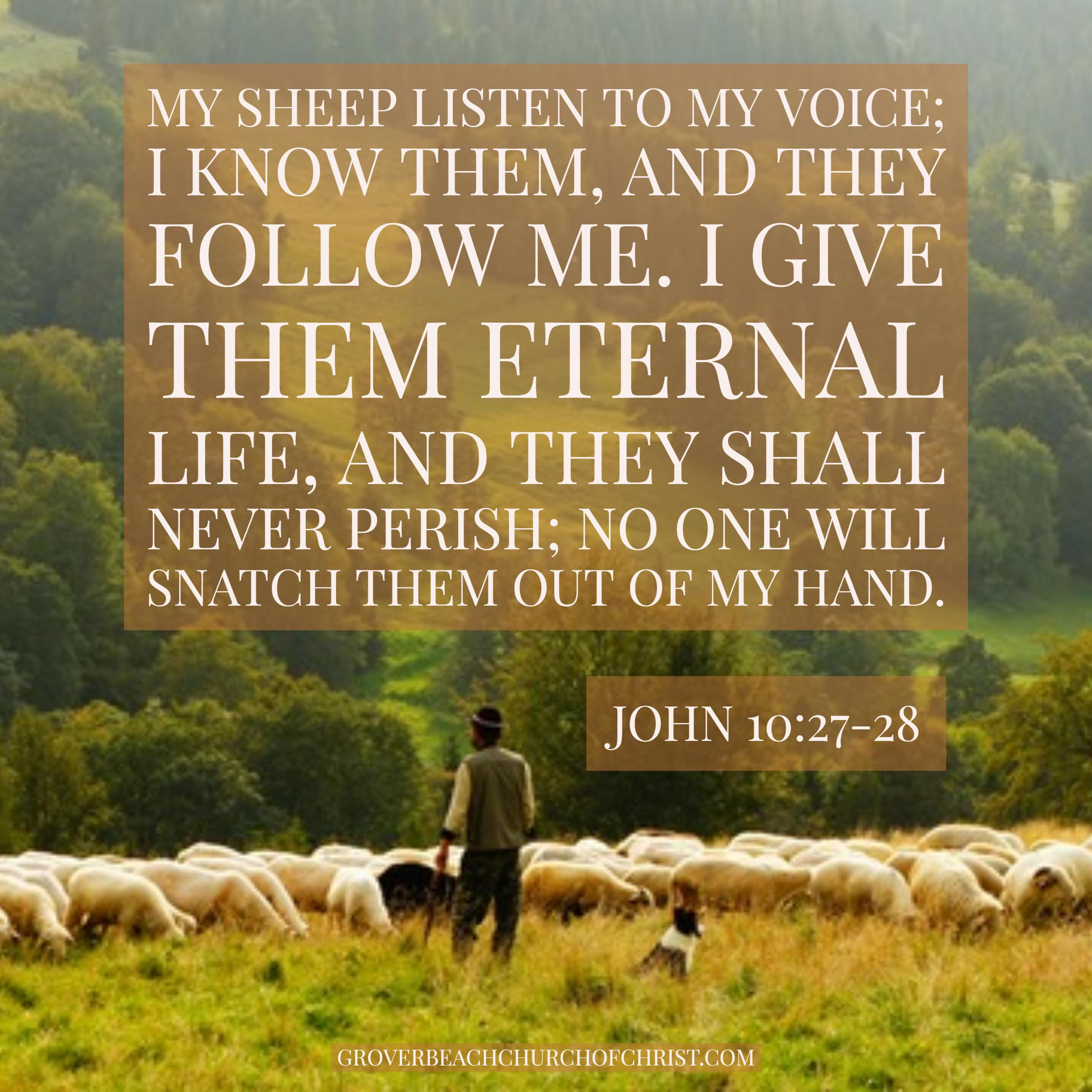 john-10:27-28-my-sheep-listen-to-my-voice
